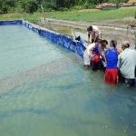 Terpal Kolam Lele / Kolam Terpal Murah – Terpal A12 Ketebalan SEDANG untuk Kolam Ikan